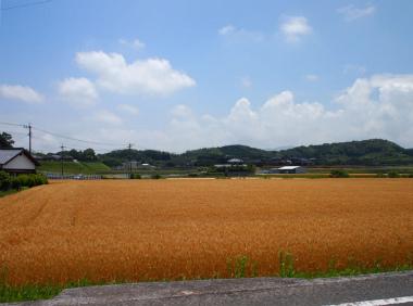 上毛町の田園風景